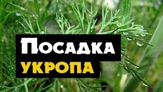 видео ПОДОКОННИКИ ДЛЯ ДОМА