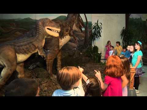 Maritime Aquarium Dinosaur Summer :30