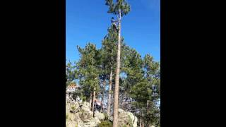 Colorado tree removal time lapse