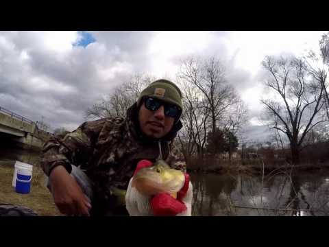 YELLOW PERCH FISHING. My rig for small fish works very well !!!