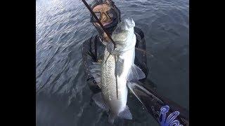 Spearfishing Greece ~ #shallow-vibes#
