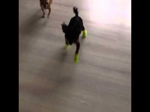 Резиновые сапоги для собак от VIP-DOG.COM