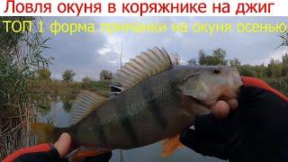 Ловля окуня в коряжнике как не терять приманки и успешно ловить рыбу в корягах Рыбалка осенью джиг