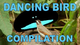 Weird And Wonderful Dancing Birds Compilation Part 1