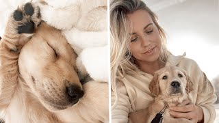 WE GOT A PUPPY!!!   | BRINGING HOME OUR 8 WEEK OLD GOLDEN RETRIEVER