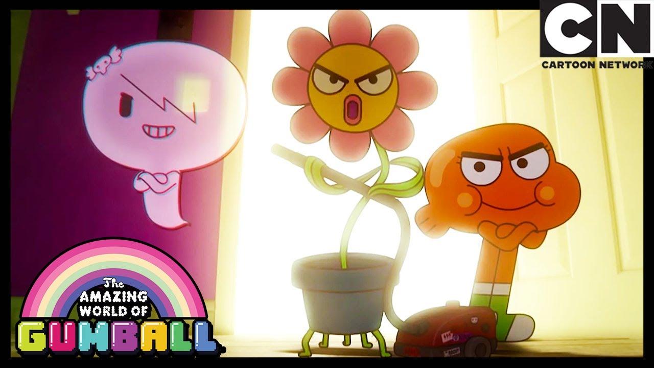 A Flor | O Incrível Mundo de Gumball | Cartoon Network 🇧🇷