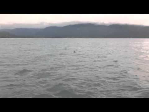 Alaska travel tour