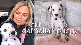 Getting our Dalmatian Puppy
