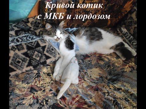 Как определить мочекаменную у кота и что делать с циститом