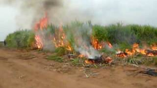 Zuenoula - Burning the Sugar Cane