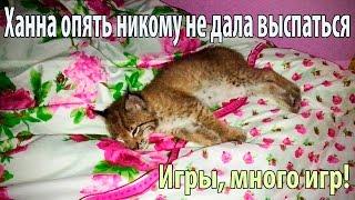 Котенок рыси играет круглые сутки и не даёт никому спать