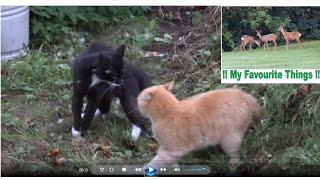 """🐱 Black CAT VS Ginger CAT 