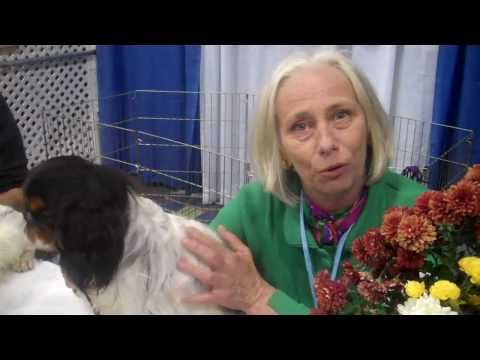 2010 Meet the Breeds: English Toy Spaniel