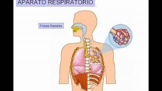 Respiratorio 1