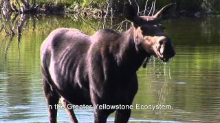 Sustainability within the Greater Yellowstone Ecosystem