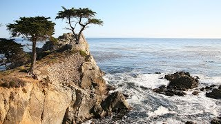 Monterey, Carmel and 17 Mile Drive Day Trip from San Francisco