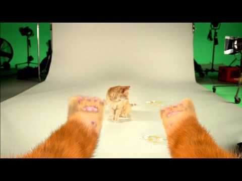 Puss In Boots Movie: Behind the Scenes Audition Tapes