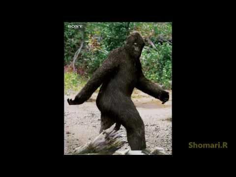 SHOCKING FEMALE BIGFOOT ENCOUNTER CAUGHT ON TAPE - YouTube