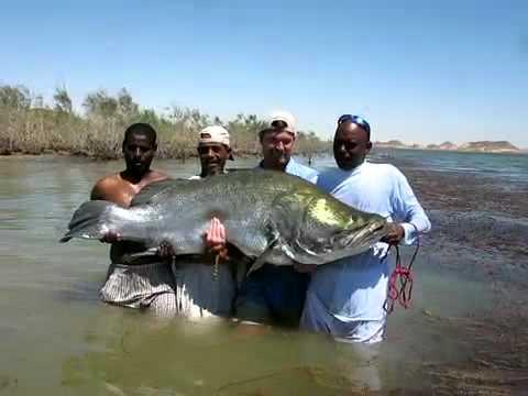 Monster nile perch fishing lake nasser youtube for Lake of egypt fishing report