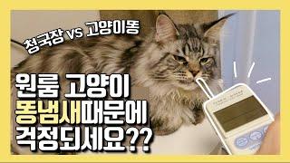원룸 고양이 똥냄새 얼마나 지독할까? 메인쿤 화장실 냄…