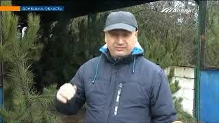 В Украине стартовал сезон елочных базаров