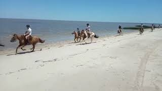 Beach Horseriding in Colonia del Sacramento