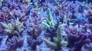Coral farm