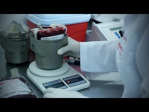 Banco de Sangre para Perros - TvAgro por Juan Gonzalo Angel