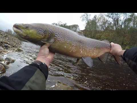 Another Back End Salmon From The South Tyne. 31st Oct. 2017