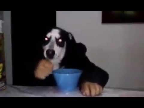 Perro comiendo cereal con una cuchara.