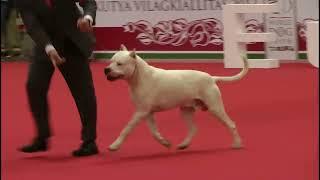 World Dog Show 2013 - Group Ii Judging