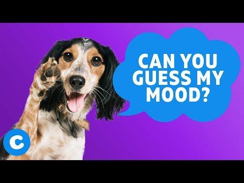 10 Super Cute Dog Moods