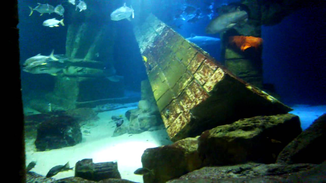 The Long Island Aquarium (Atlantis Marine World) part 1 ...