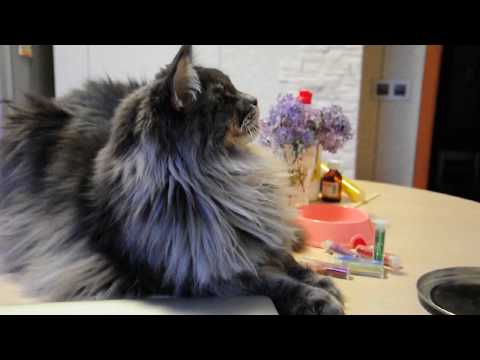 Кот и лизун 2
