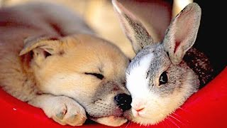 Cute Rabbits Playing With Dogs Compilation NEW