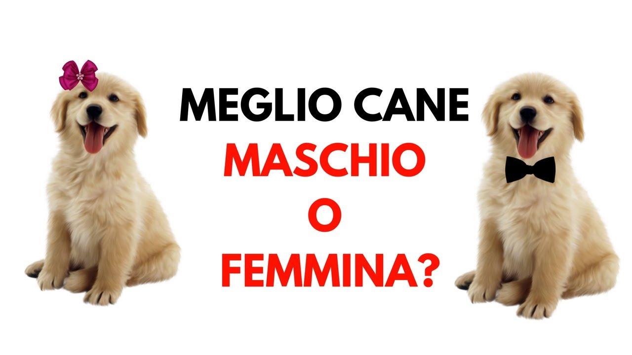 e 39 meglio il cane maschio o il cane femmina pro e contro On cane maschio o femmina
