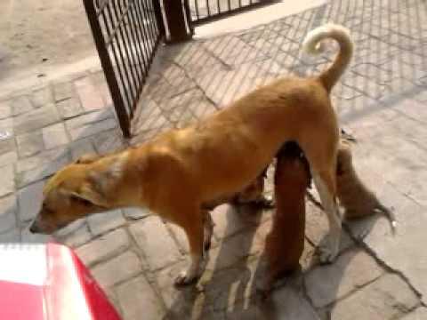 Bhabhi ko kutte se chudwaya thumbnail