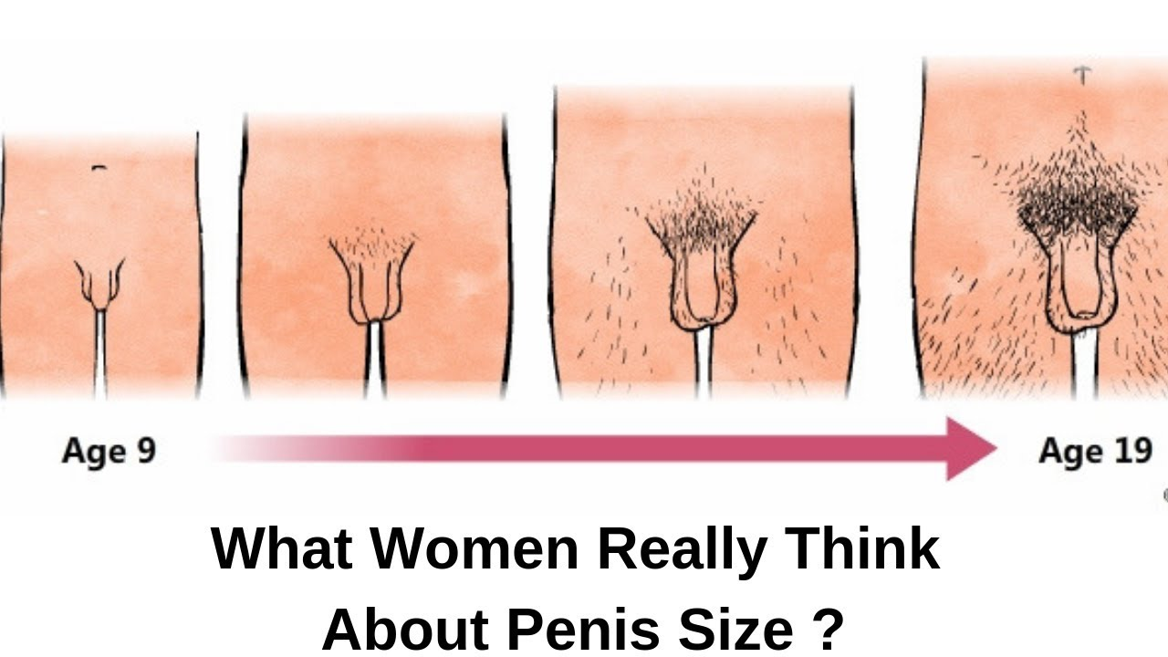Erect Dicks And Average Penis Size White And Male Enhancers