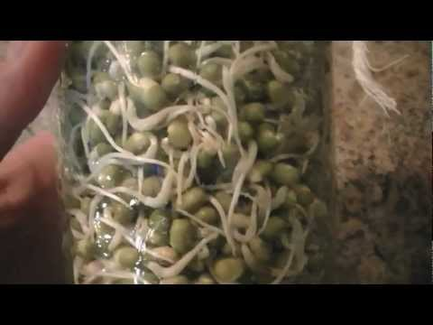How to Jar Sprout Organic Mung Beans @ Home