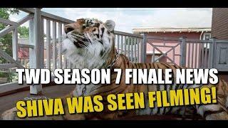 The Walking Dead Season 7 Episode 16 Shiva Was Seen Filming! Leaked Pics