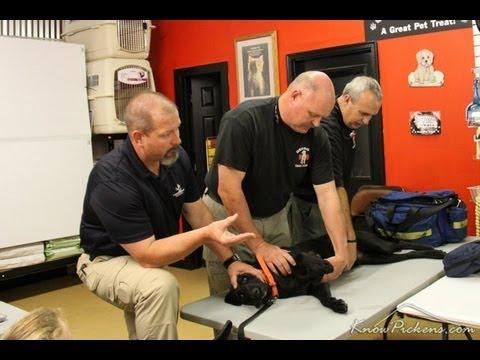 Basic K9 First Aid Class