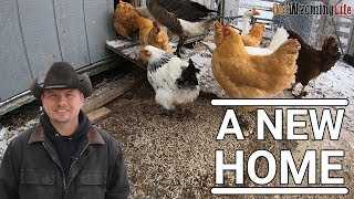 a-new-chicken-project-chicken-house-and-run