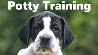 How To Potty Train A Pointer Puppy - Pointer House Training Tips - Housebreaking Pointer Puppies
