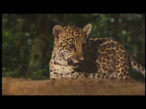 Conflicts of Nature : Conflicts in the Jungle (Wildlife Docu