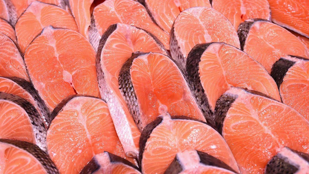 Resultado de imagem para cultivo de salmão