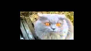 Кот после валерьянки.