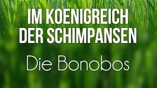 Im Königreich der Schimpansen - Die Bonobos (2008) [Dokumentation] | Film (deutsch)