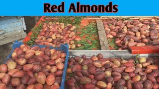 Red Almonds   LaaL Badam   One Piece 10rs