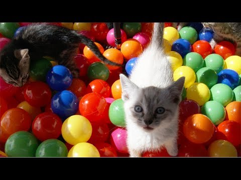 Ball Pit + Kittens = Lots Of Cute Fun!!