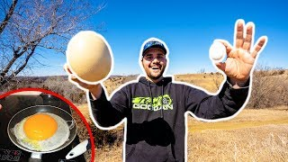 Giant OSTRICH EGG Catch Clean Cook!!! (Surprising Results!)